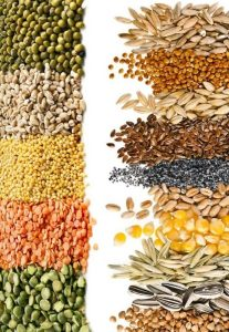 Small piles of seeds and grains side by side
